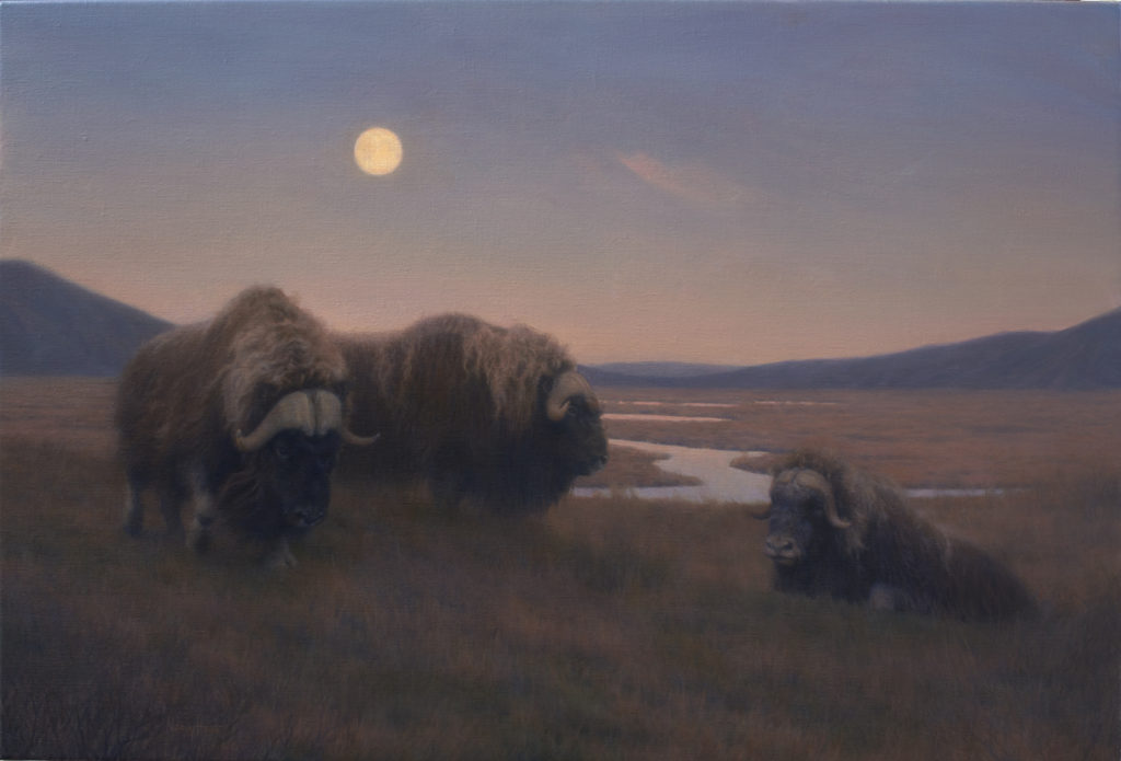 Oomingmak On The Rise • 2016 • 20 x 30 • Oil on linen • Musk Oxen